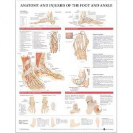 Anatomy and Injuries of the Foot and Ankle Poster
